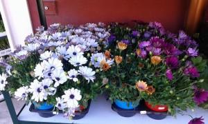 fiori-punto-verde-priolo-gargallo