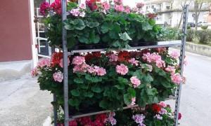 piante-e-fiori-punto-verde
