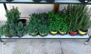 piante-punto-verde-priolo-gargallo